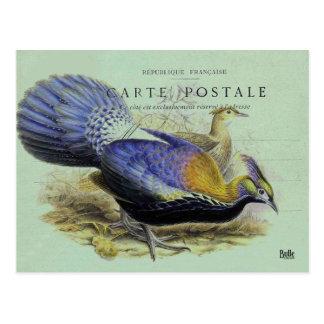 Cartão Postal Mapa postal pássaro violeta