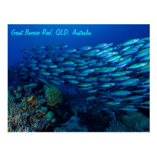 Cartão Postal Mar coral recife de coral tropical dos peixes do