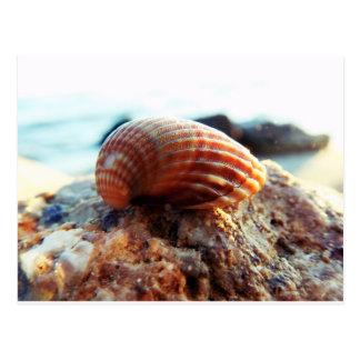 Cartão Postal Mar Shell