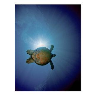 Cartão Postal Mar subaquático de Turtle| Andaman, Tailândia