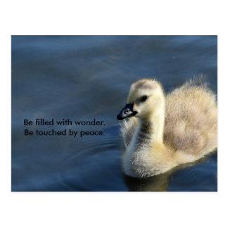 Cartão Postal Maravilha e paz