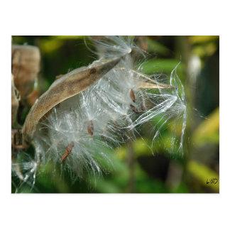Cartão Postal Maravilhas de sementes de Nature~