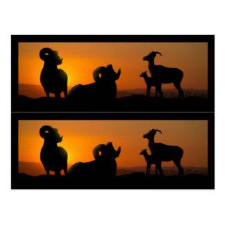 Cartão Postal Marcadores de livro dos carneiros do Big Horn