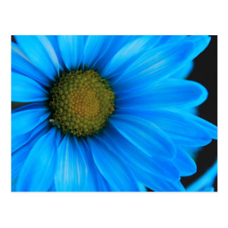 Cartão Postal Margarida azul brilhante