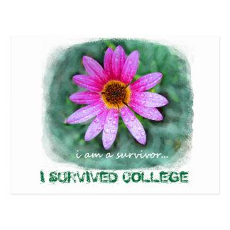 Cartão Postal Margarida cor-de-rosa eu sou um sobrevivente