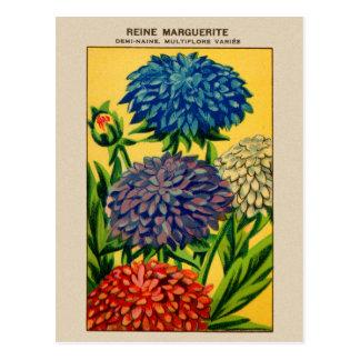 Cartão Postal Margarida francesa da rainha do pacote da semente