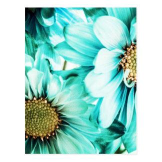 Cartão Postal Margaridas azuis & amarelas