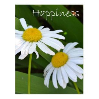 Cartão Postal Margaridas da felicidade