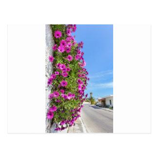 Cartão Postal Margaridas espanholas cor-de-rosa de suspensão na