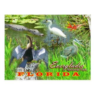 Cartão Postal Marismas parque nacional, Florida