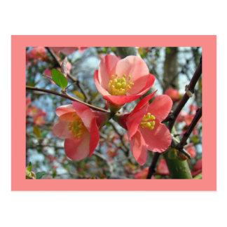 Cartão Postal Marmelo de florescência - speciosa do Chaenomeles