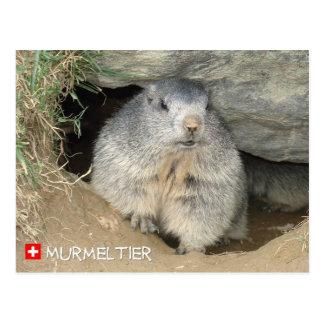 Cartão Postal Marmota, Suíça, Marmot, Switzerland,/