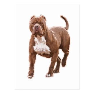Cartão Postal Marrom do pitbull