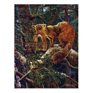 Cartão Postal Marten de pinho com rapina