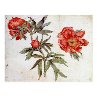 Cartão Postal Martin Schongauer: Estudo das peônias