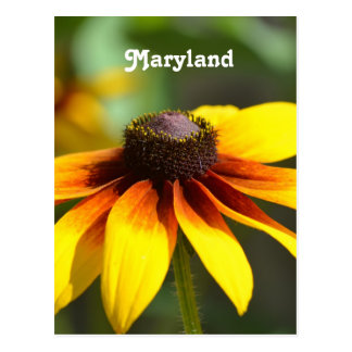 Cartão Postal Maryland Susan de olhos pretos