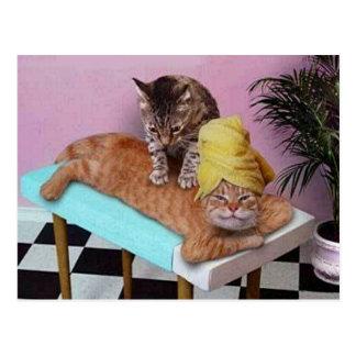 Cartão Postal Massagem engraçada do gato
