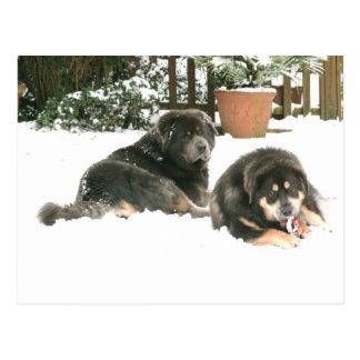 Cartão Postal Mastiff tibetano Caspar & Jampo
