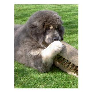 Cartão Postal Mastiff tibetano Jampo com vassoura