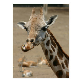 Cartão Postal Mastigação do girafa