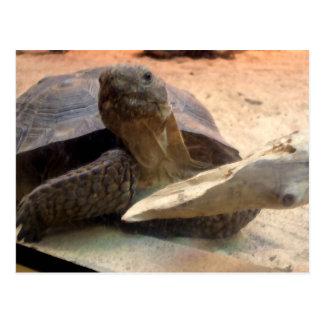 Cartão Postal Material amigável do desenhista da tartaruga do