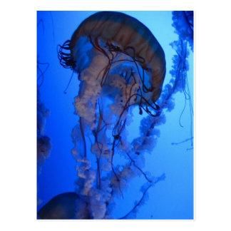 Cartão Postal Medusa