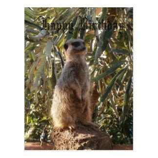 Cartão Postal Meerkat no dever de guarda, feliz aniversario