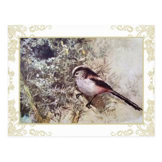 Cartão Postal Melharuco de cauda longa