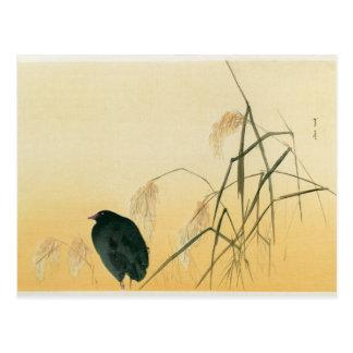 Cartão Postal Melro, período de Edo