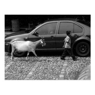 Cartão Postal Menino e cabra, La Antígua Guatemala