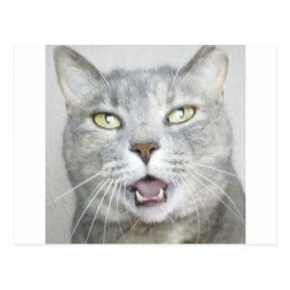 Cartão Postal meow aberto divertido macio da boca do gato