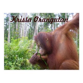 Cartão Postal Mercadoria do clube de fãs do orangotango de