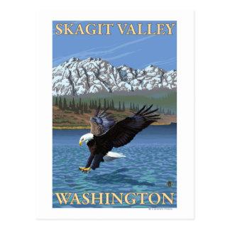 Cartão Postal Mergulho da águia americana - vale de Skagit,