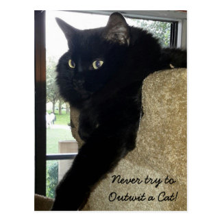 Cartão Postal Merlin as citações do gato