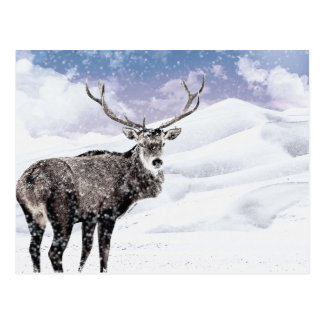 Cartão Postal Meu veado do inverno do Natal!