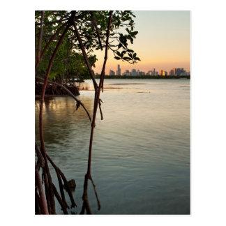 Cartão Postal Miami e manguezais no por do sol