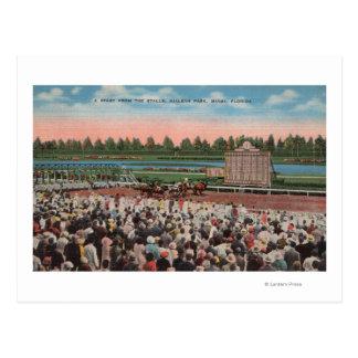 Cartão Postal Miami, FL - vista do parque de Hialeah com cavalo