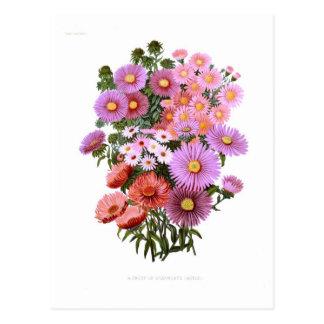 Cartão Postal Michaelmas Dasies (ásteres)