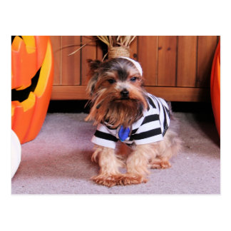 Cartão Postal Mickey - yorkshire terrier - Shannon