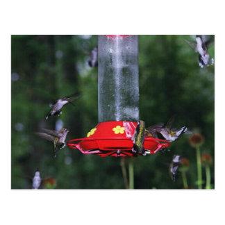 Cartão Postal Migração do colibri da queda