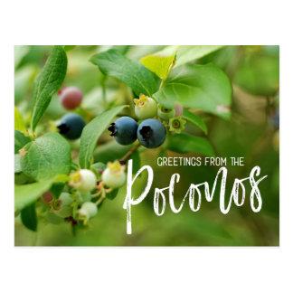 Cartão Postal Mirtilos selvagens no Poconos