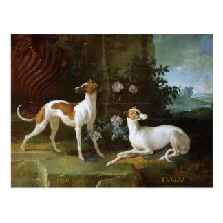 Cartão Postal Misse e Turlu, dois galgos de Louis XV
