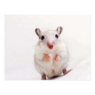 Cartão Postal Modelo bonito animal dos Gerbils do animal de