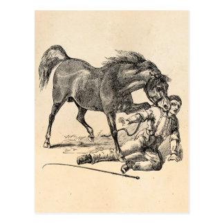 Cartão Postal Modelo cortante vicioso do cavalo do vintage