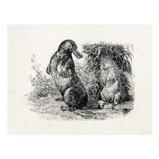 Cartão Postal Modelo do Anteater do porco- de Platypus do
