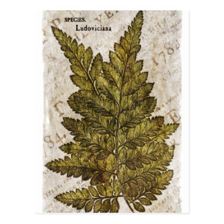 Cartão Postal Modelo tropical das samambaias botânicas verdes da