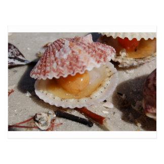 Cartão Postal Moluscos da praia