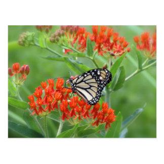 Cartão Postal Monarca na erva daninha de borboleta