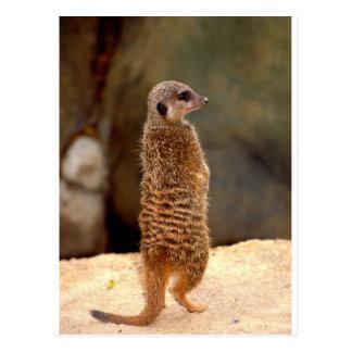 Cartão Postal Mongoose10