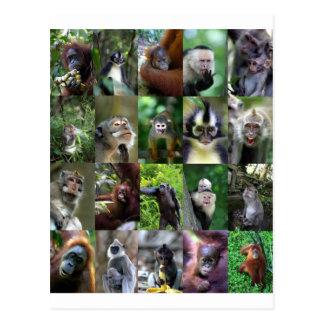 Cartão Postal Montagem do primata do macaco